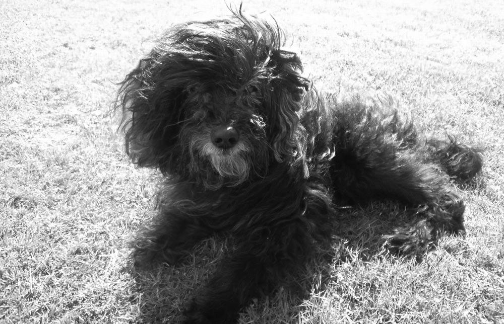 Rocky, le chien avec qui j'ai grandit. Il nous  quitté en 2009